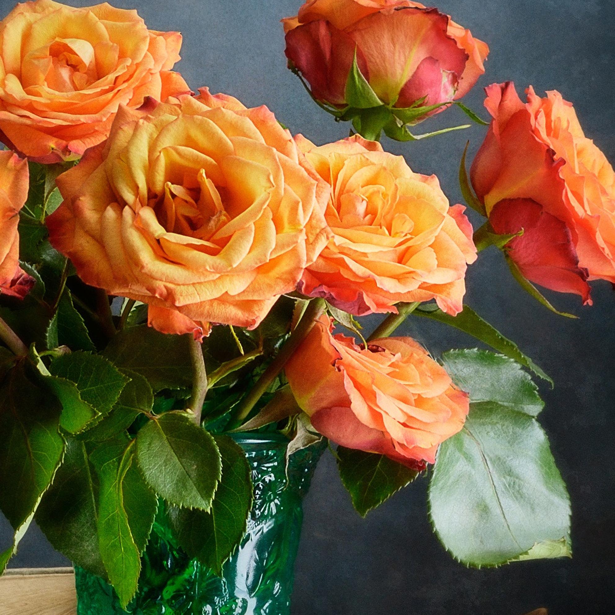 Cận cảnh những đóa hoa hồng tuyệt đẹp
