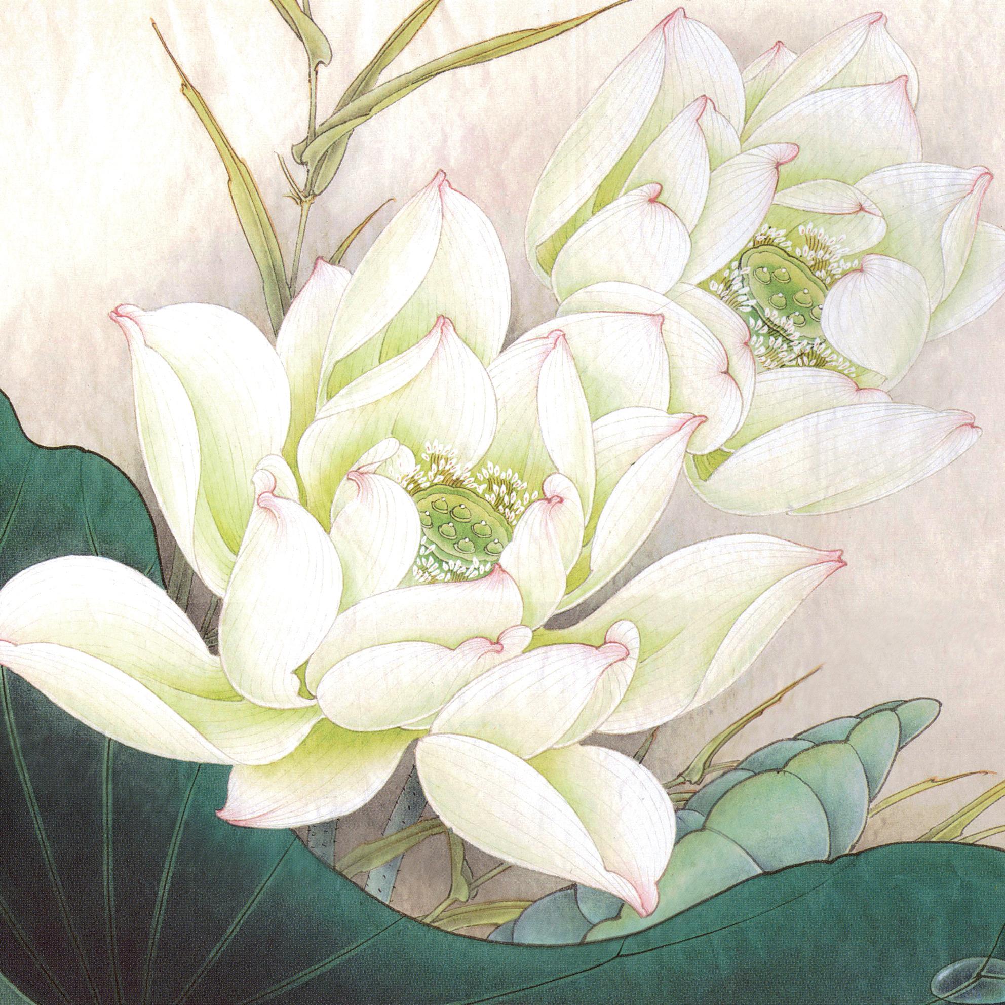 Tranh hoa sen trắng tốt lành