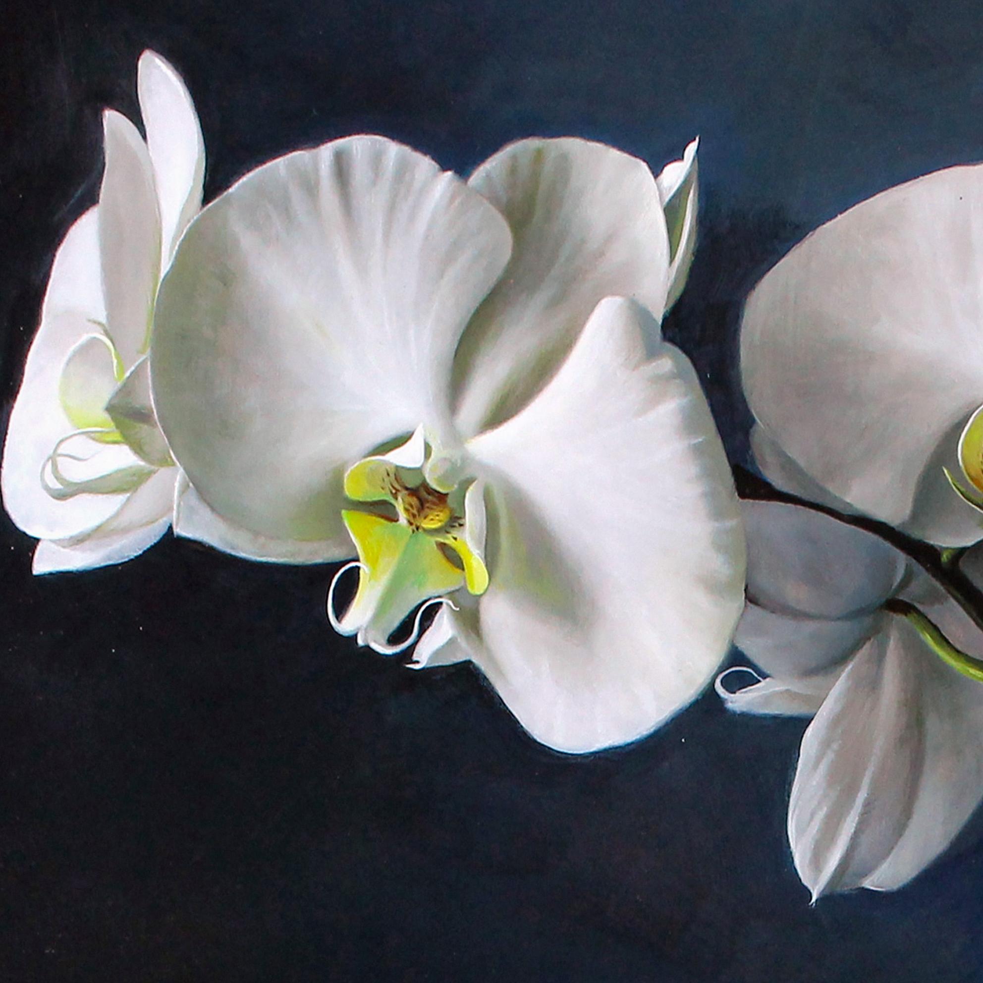 Cận cảnh tranh vẽ hoa lan trắng cực kỳ tinh tế