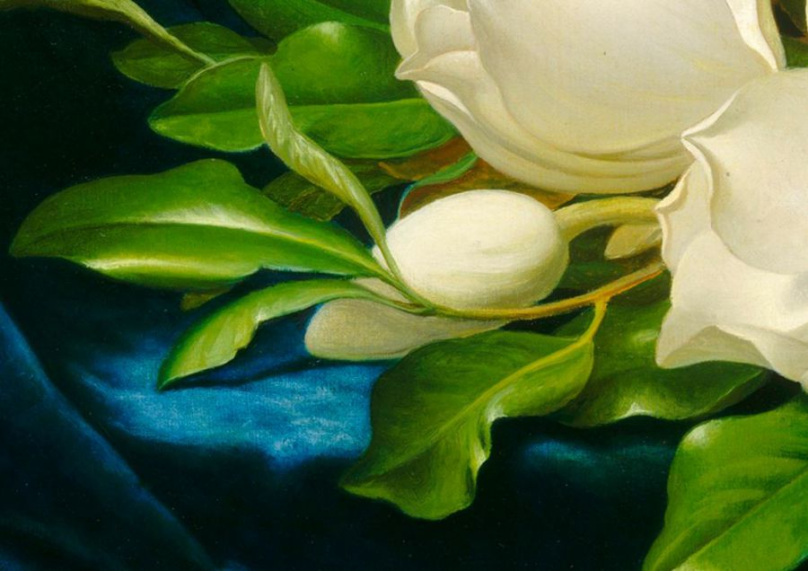 tranh hoa tra tinh khiet thanh nha